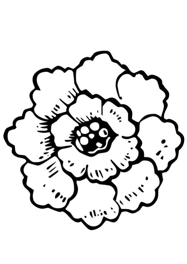 Coloriage Fleur De Nenuphar.Beautiful Coloriage Fleur De Lotus Luxe Coloriage Fleur De