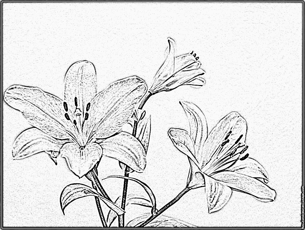 Fleur De Lys Tatouage Poignet