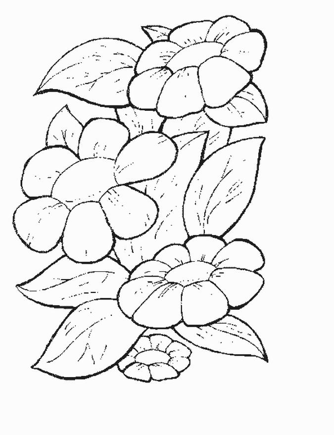 Coloriage Fleur Printemps A Imprimer.Dessin A Imprimer Fleurs De Printemps