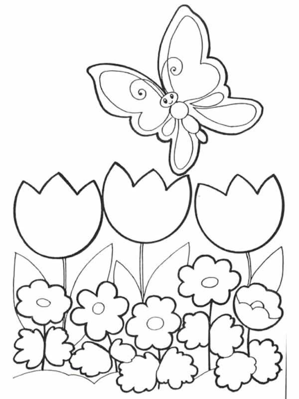Coloriage Fleur Doranger.Dessin Fleur D Oranger