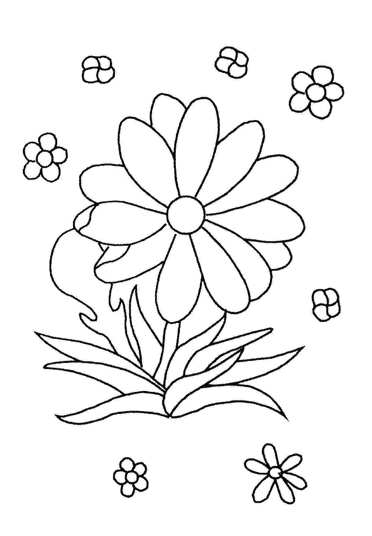 Dessin fleur capucine - Coloriage fleur capucine ...