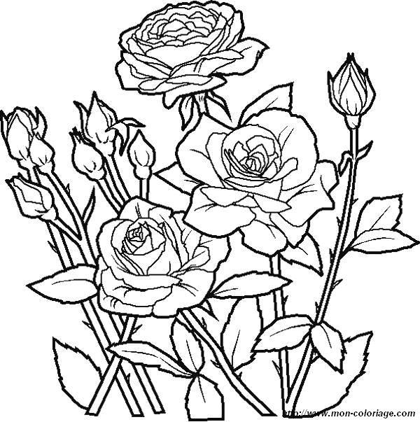 Coloriage dessiner fleur imprimer gratuit - Fleur a imprimer gratuit ...