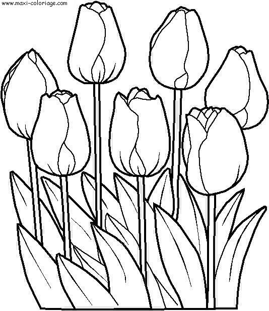 Coloriage dessiner a imprimer fleur de lys - Coloriage fleur a imprimer ...