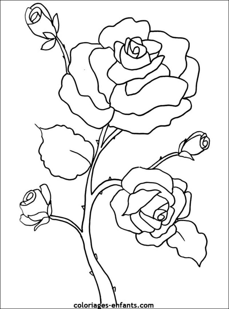 dessin à colorier fleurs et plantes ligne