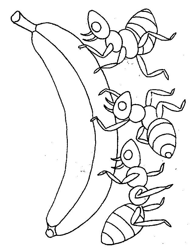 dessin à colorier imprimer fourmis