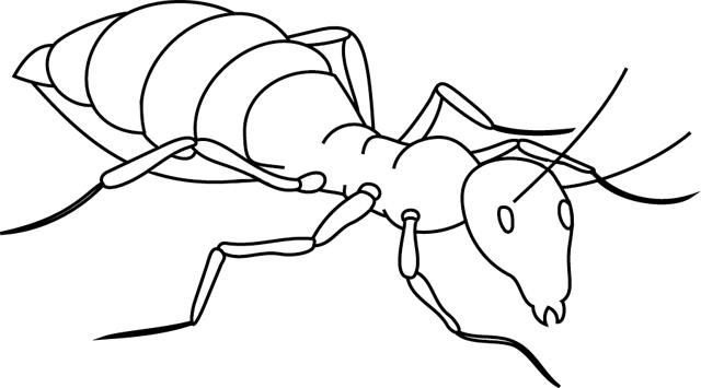 coloriage à dessiner imprimer fourmis