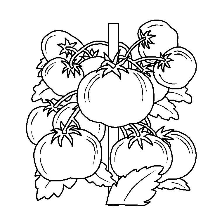 96 dessins de coloriage fruits et l gumes rigolos imprimer for Image de jardin a imprimer