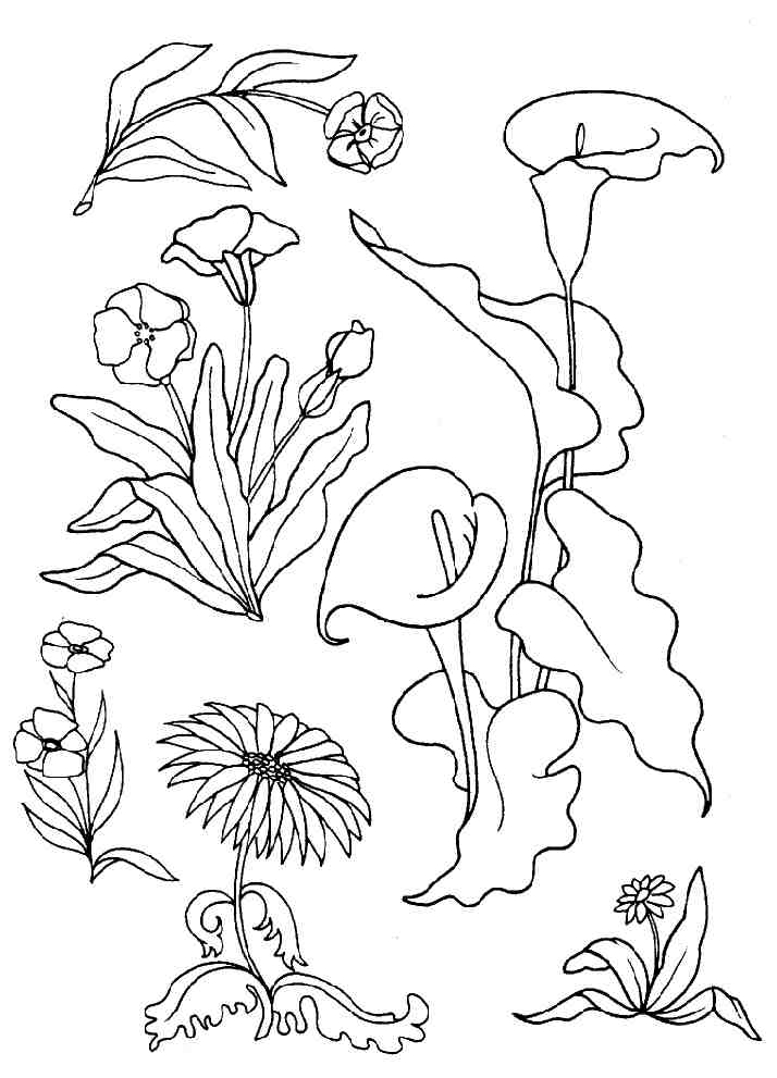 87 dessins de coloriage fruits exotiques  u00e0 imprimer