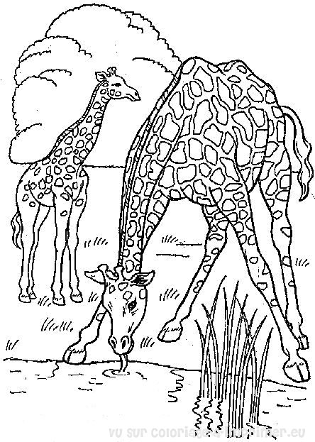 Kleurplaat Jungle Volwassenen 20 Dessins De Coloriage Girafe 224 Imprimer 224 Imprimer