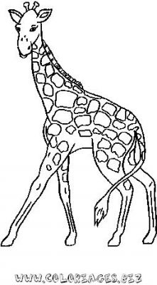 coloriage à dessiner codé girafe