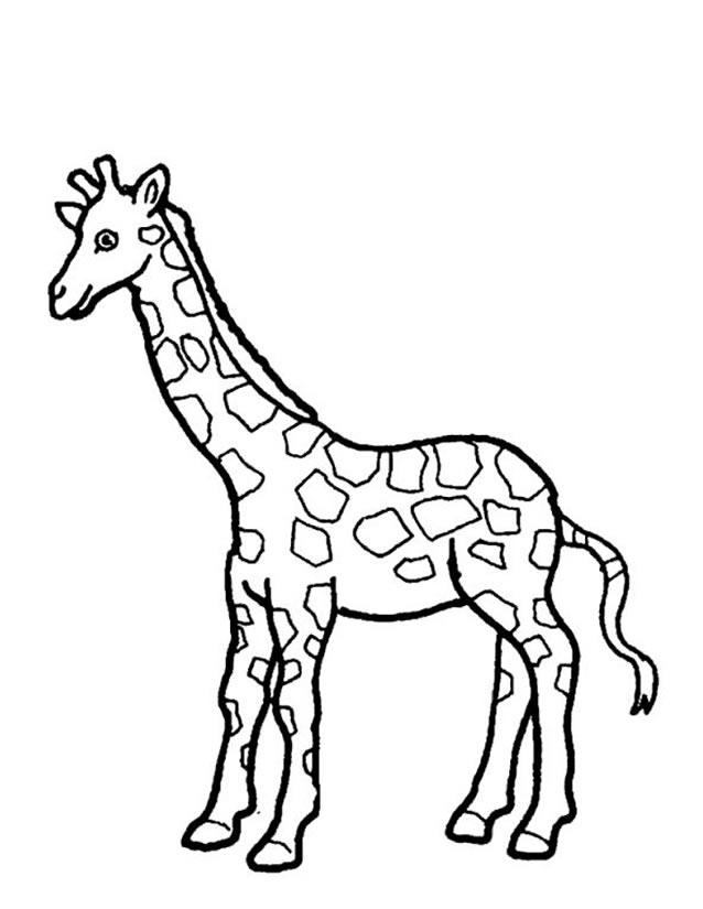 Dessin A Colorier Girafe