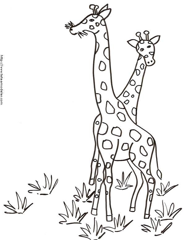 modele dessin à colorier girafe