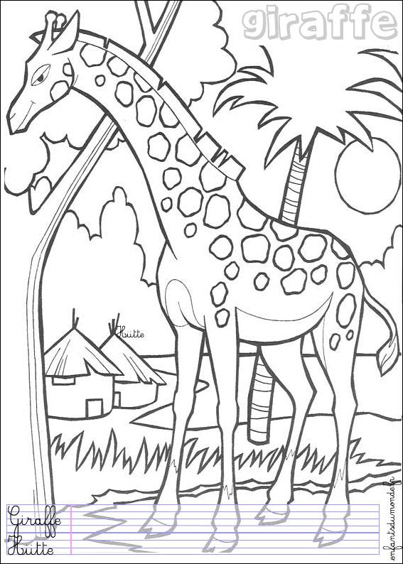 coloriage girafe et girafon
