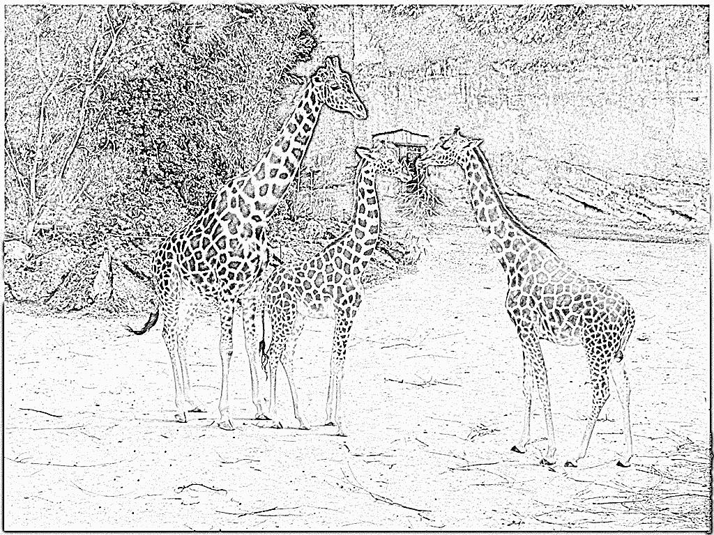 Coloriage de girafe a colorier - Girafe rigolote ...