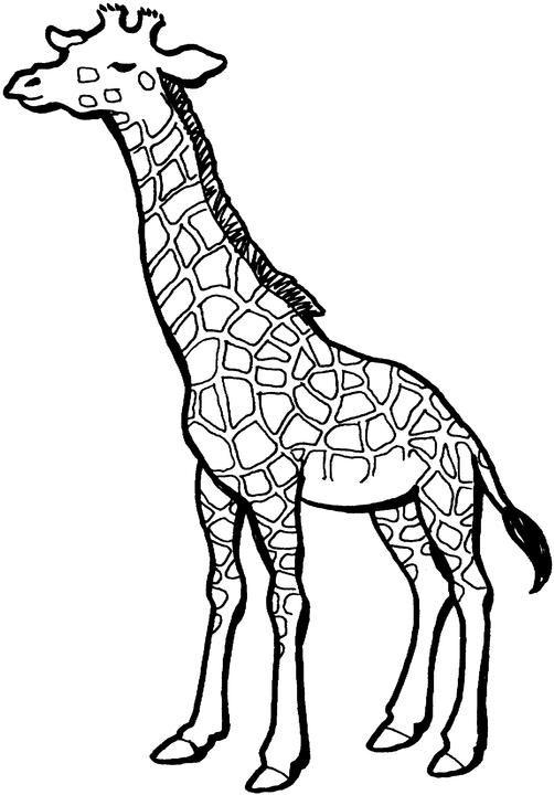 dessin à colorier gilda la girafe