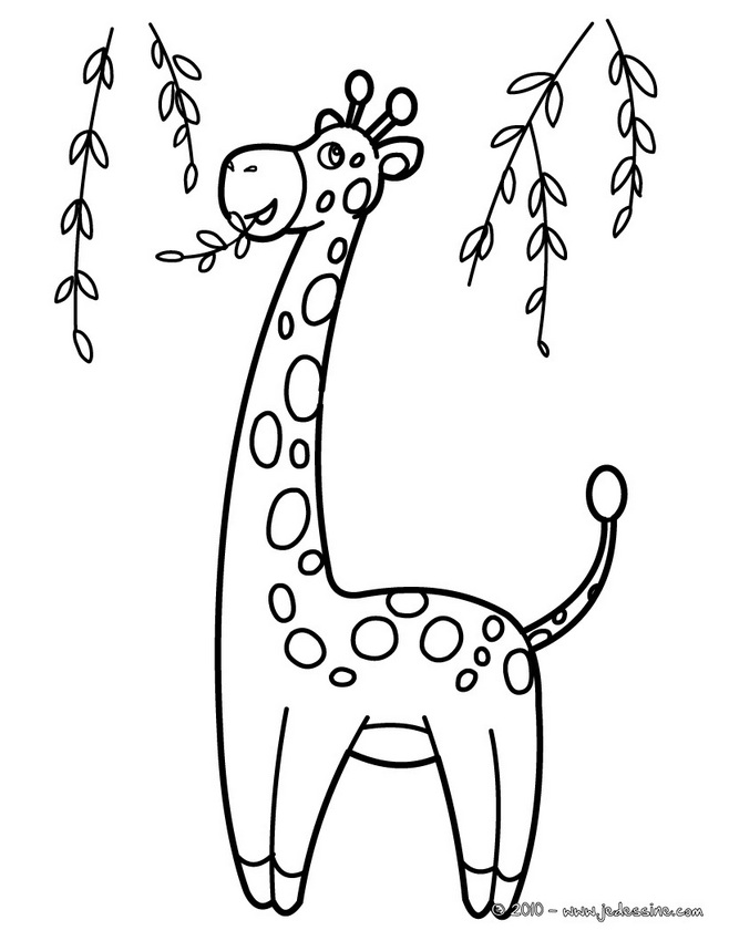 coloriage à dessiner la girafe