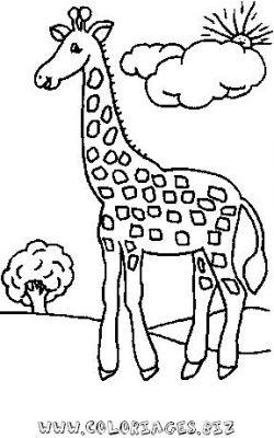 dessin camille la girafe