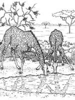 dessin coloriage à dessiner girafe