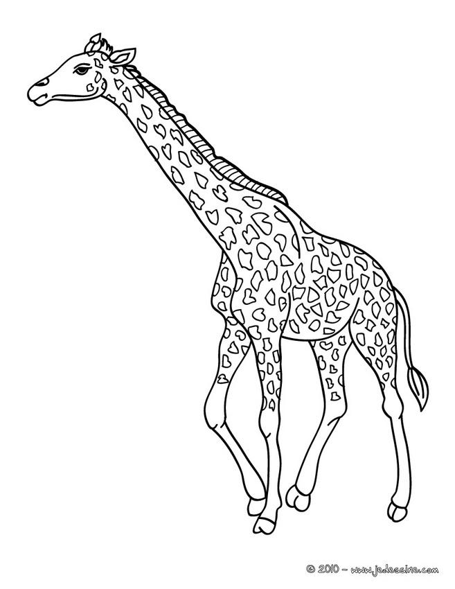 vrac dessin à colorier girafe
