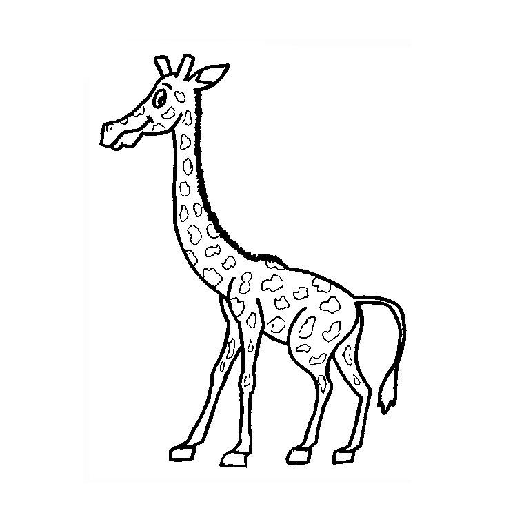 vrac dessin girafe