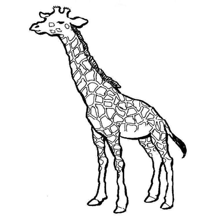dessin à colorier girafe sans tache