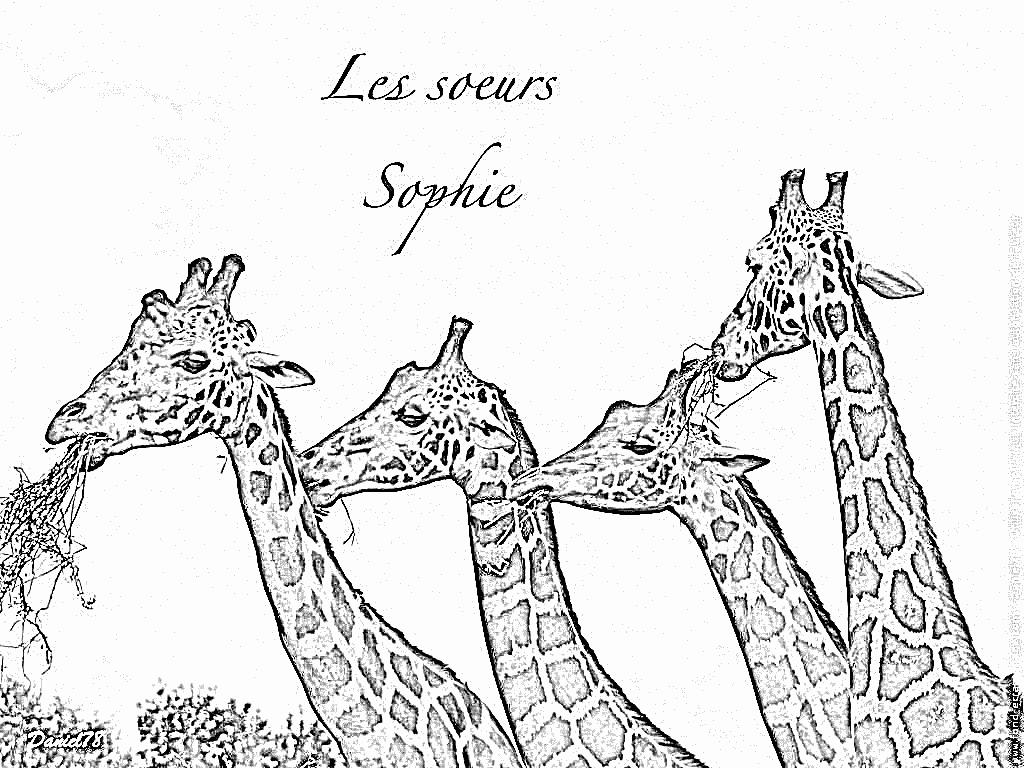 Coloriage girafe et girafon - Girafe a imprimer ...