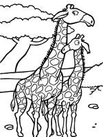 dessin girafe et girafon