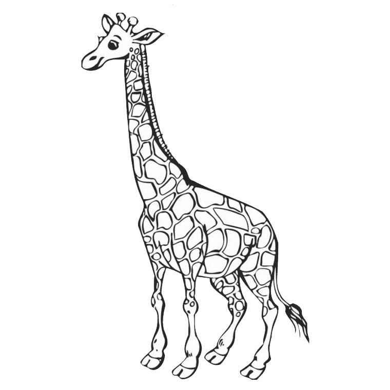 dessin girafe imprimer gratuit