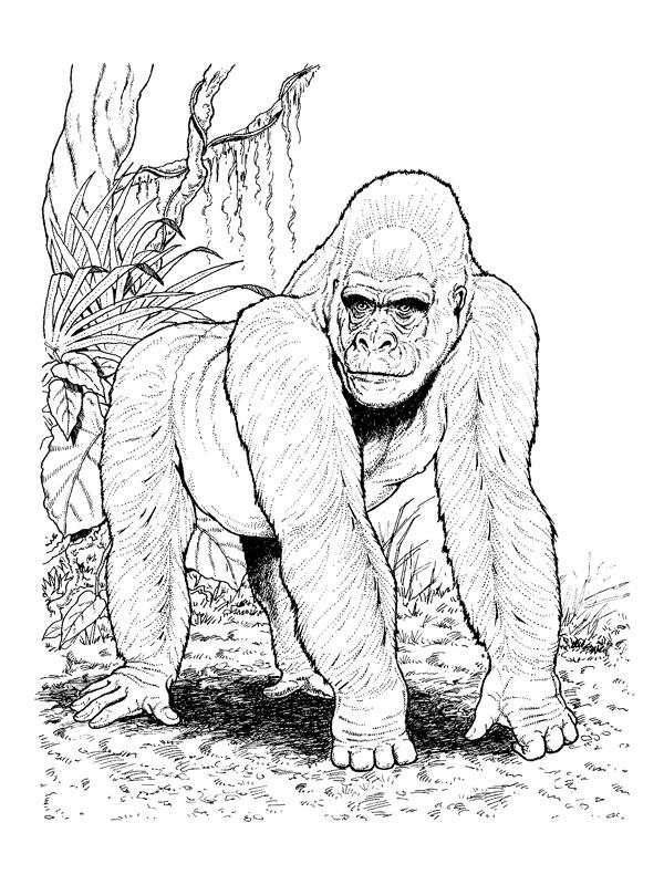 dessin gorille imprimer