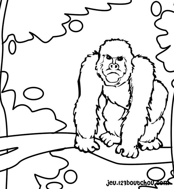 Dessin colorier gorille - Gorille coloriage ...