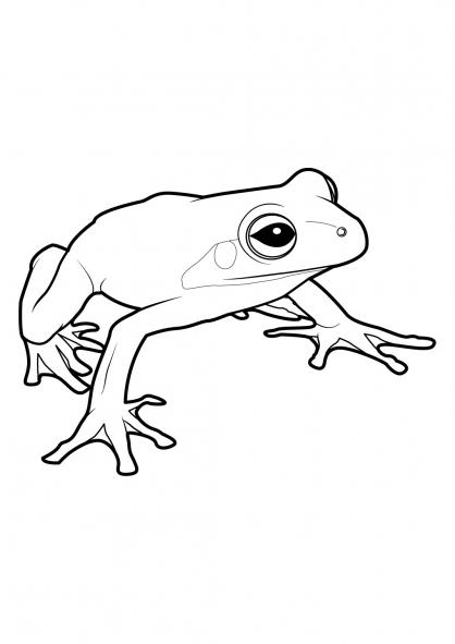 coloriage à dessiner grenouille princesse
