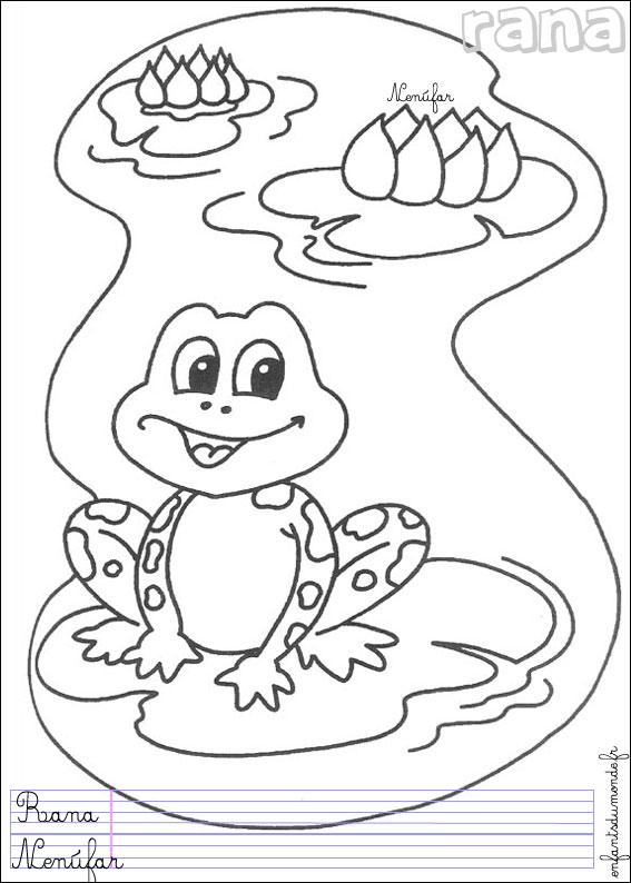 dessin grenouille à grande bouche
