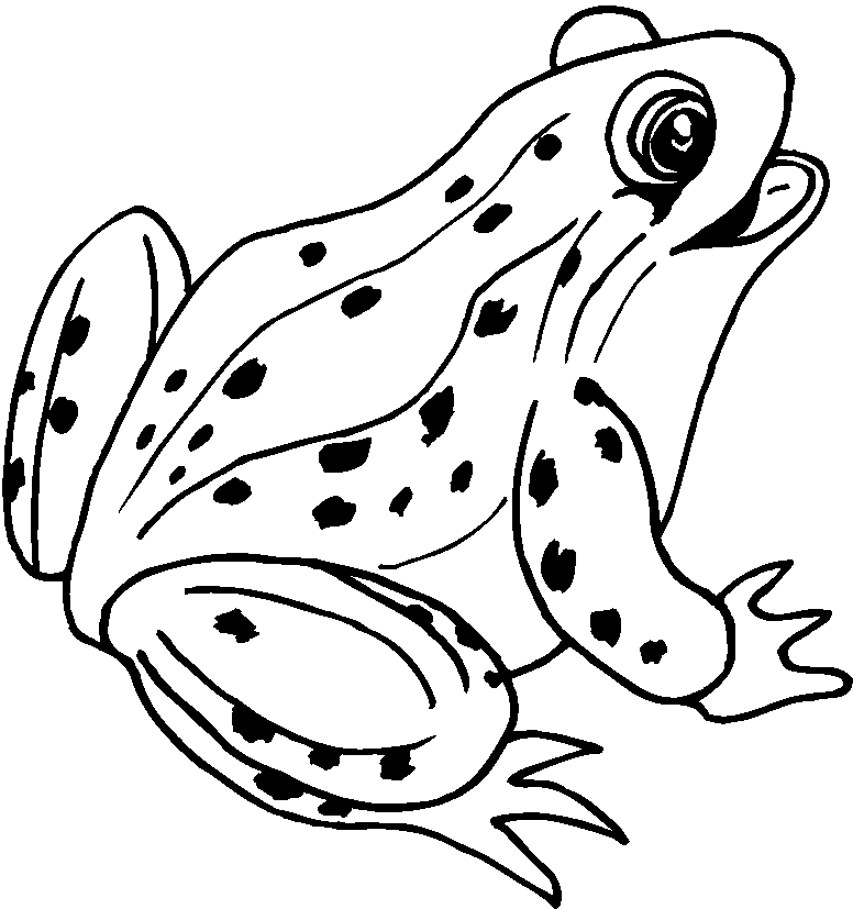 Coloriage dessiner dessiner une grenouille - Dessin de crapaud ...