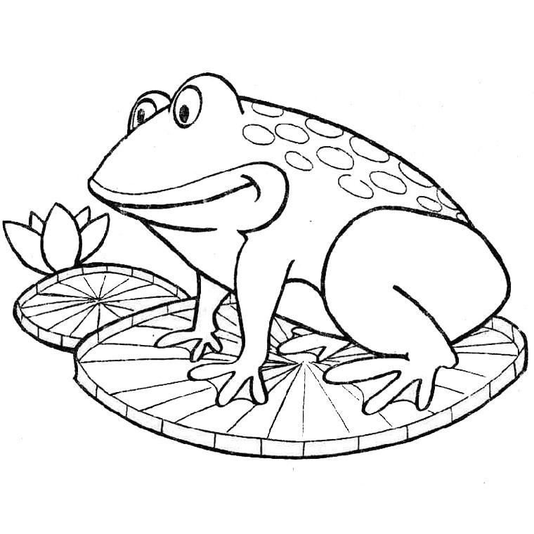 dessin à colorier grenouille à imprimer