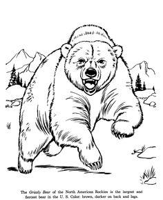 dessin à colorier grizzly imprimer