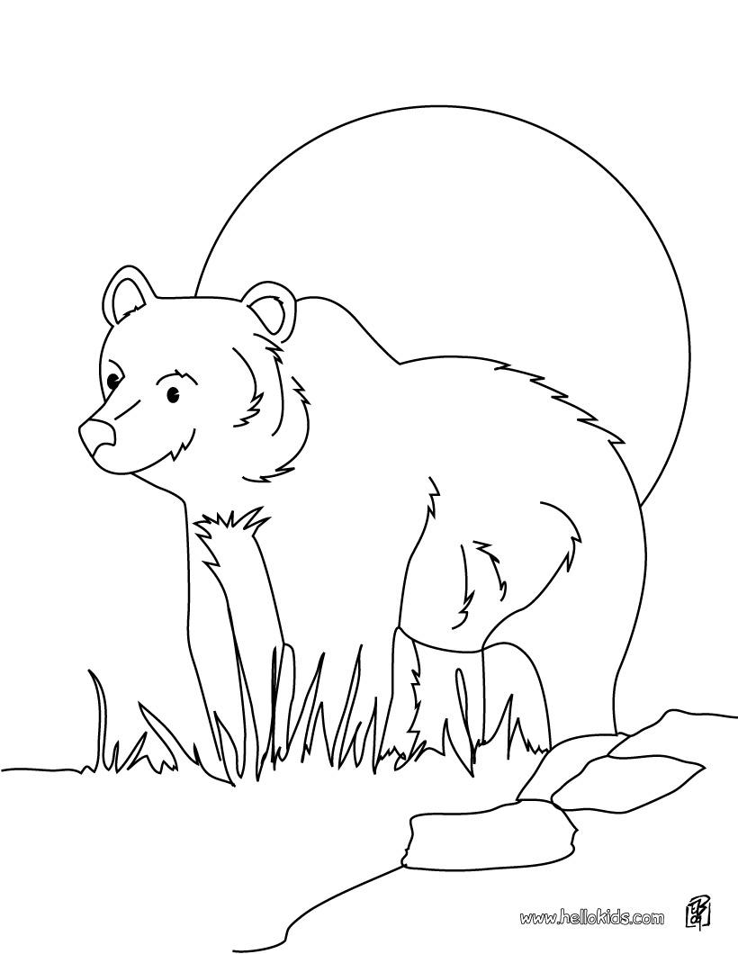 coloriage � dessiner grizzly imprimer