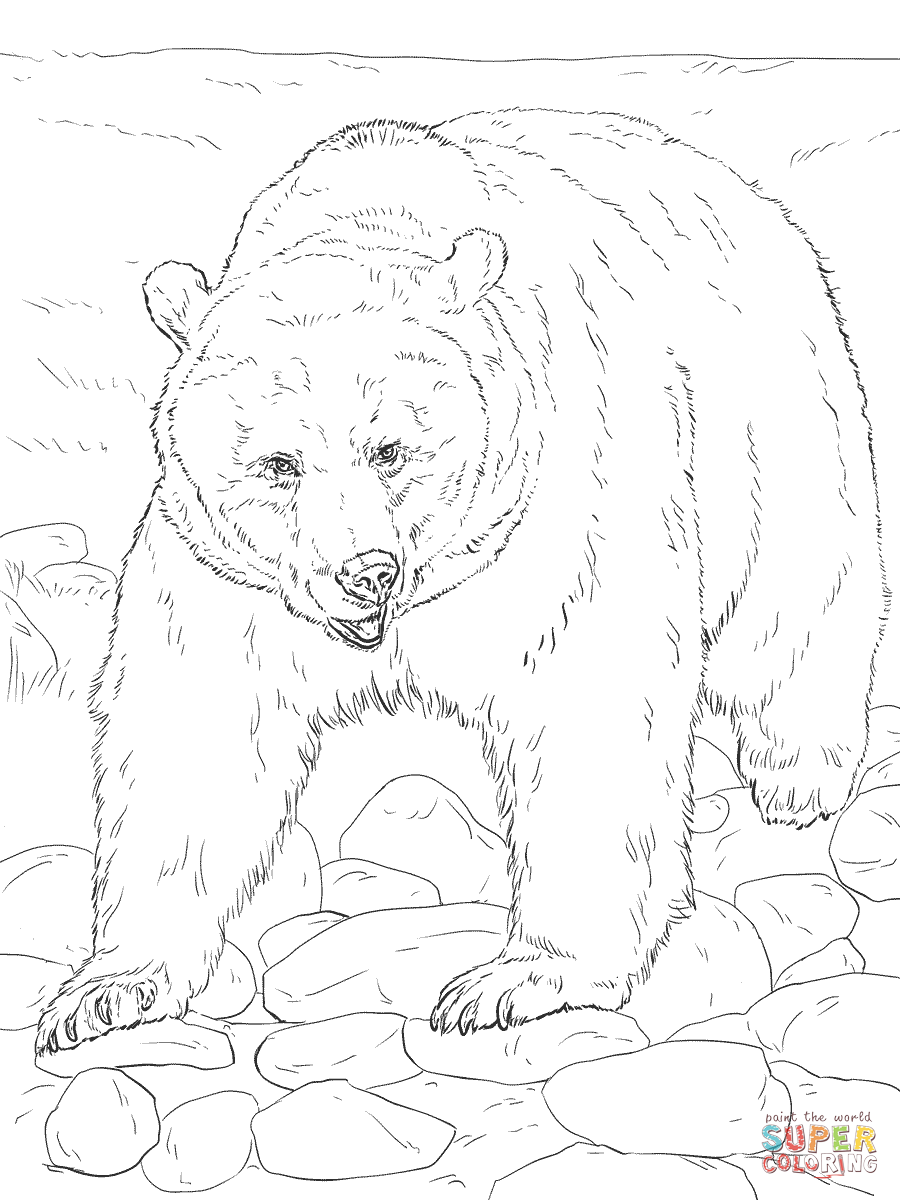 dessin � colorier grizzly