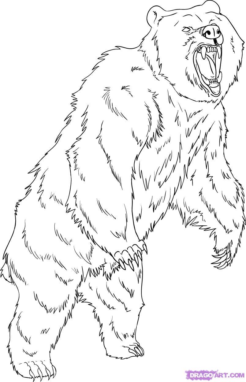 dessin grizzly imprimer
