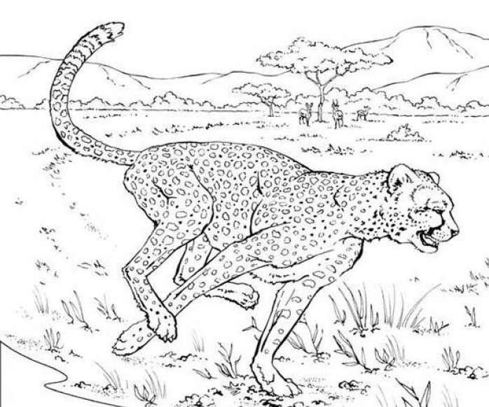 coloriage bebe guepard