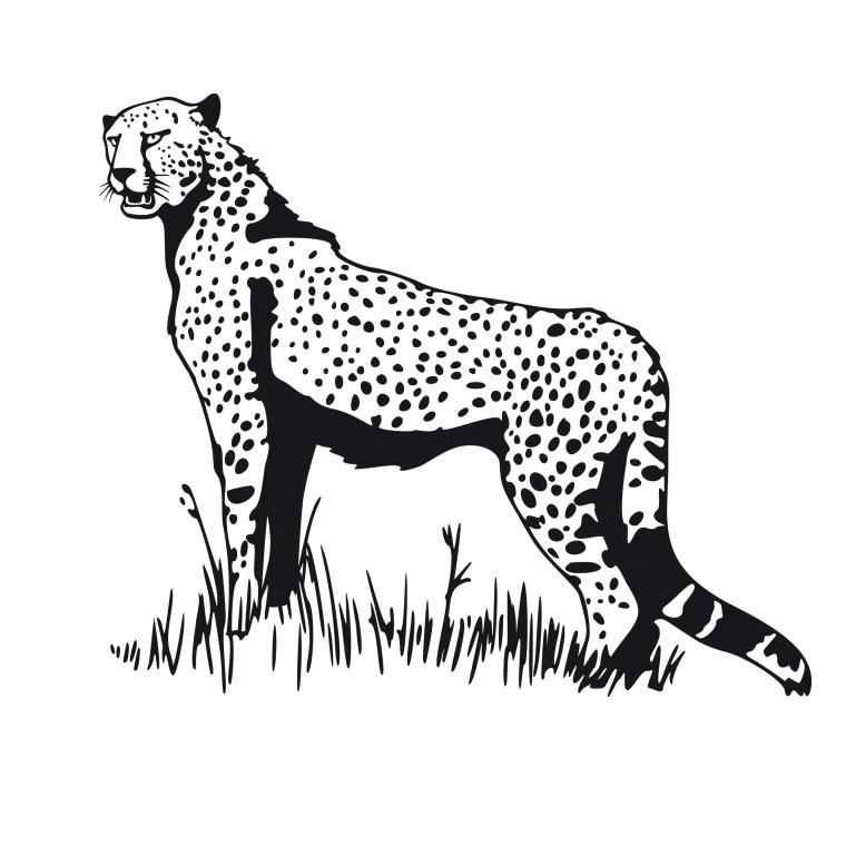coloriage de guépard qui chasse
