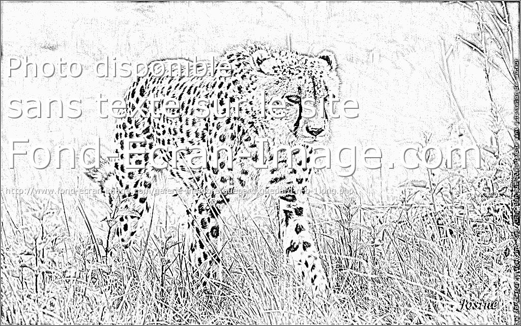 dessin de guépard qui chasse