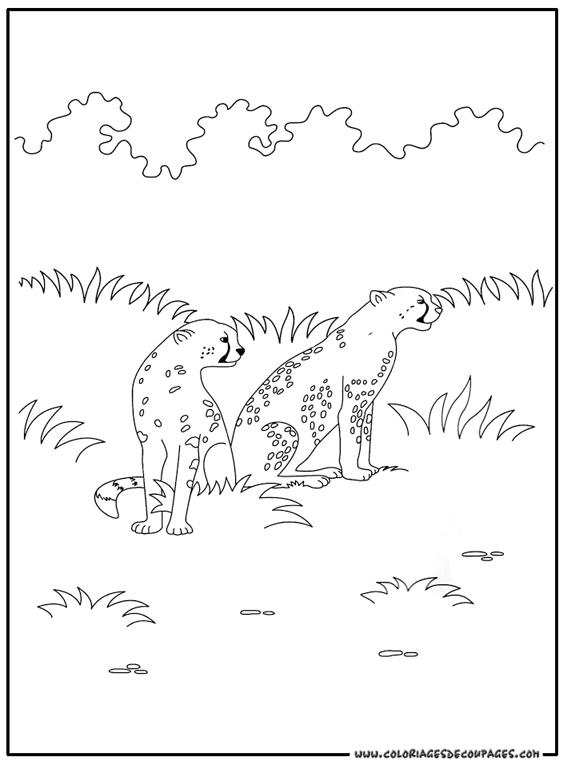 Coloriage dessiner guepard colorier - Guepard dessin ...