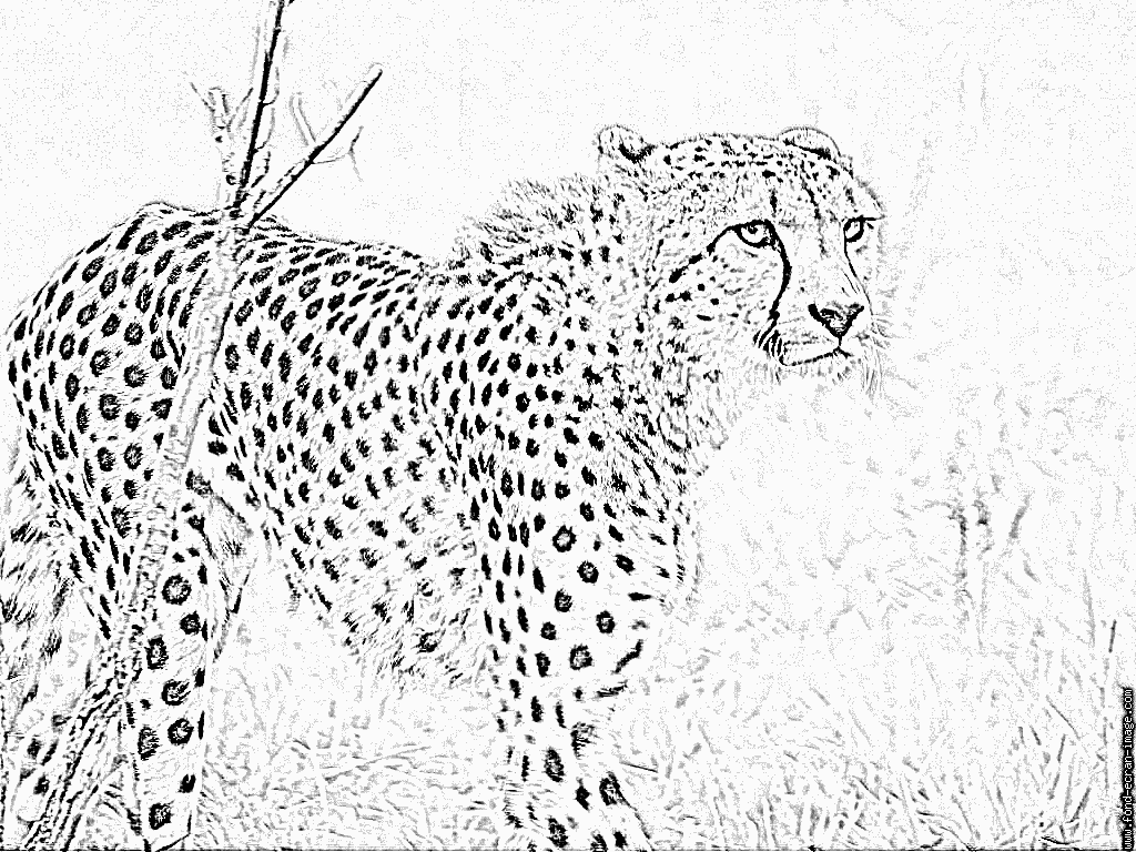 Dessin animaux guepard - Image animaux a imprimer ...