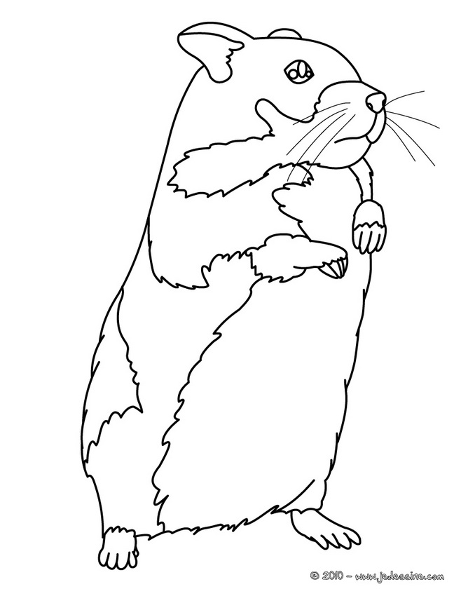 comment dessiner hamster mignon