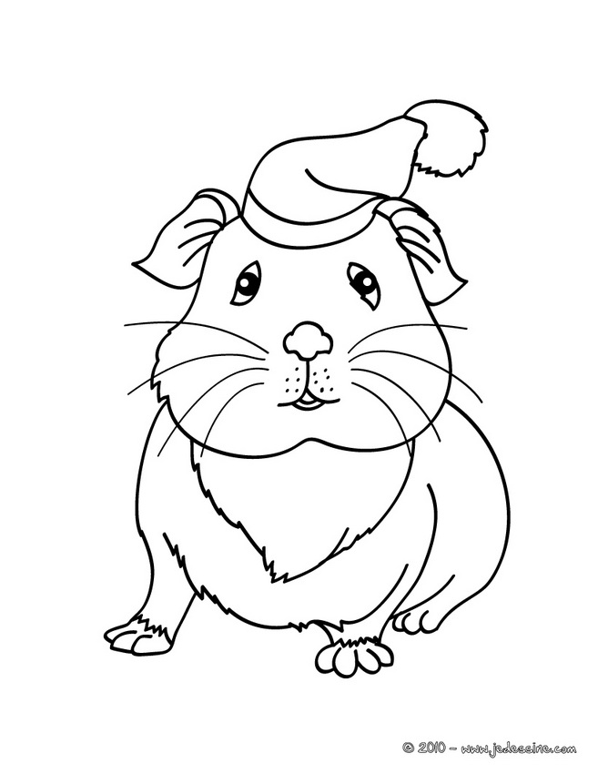 dessin hamster gratuit
