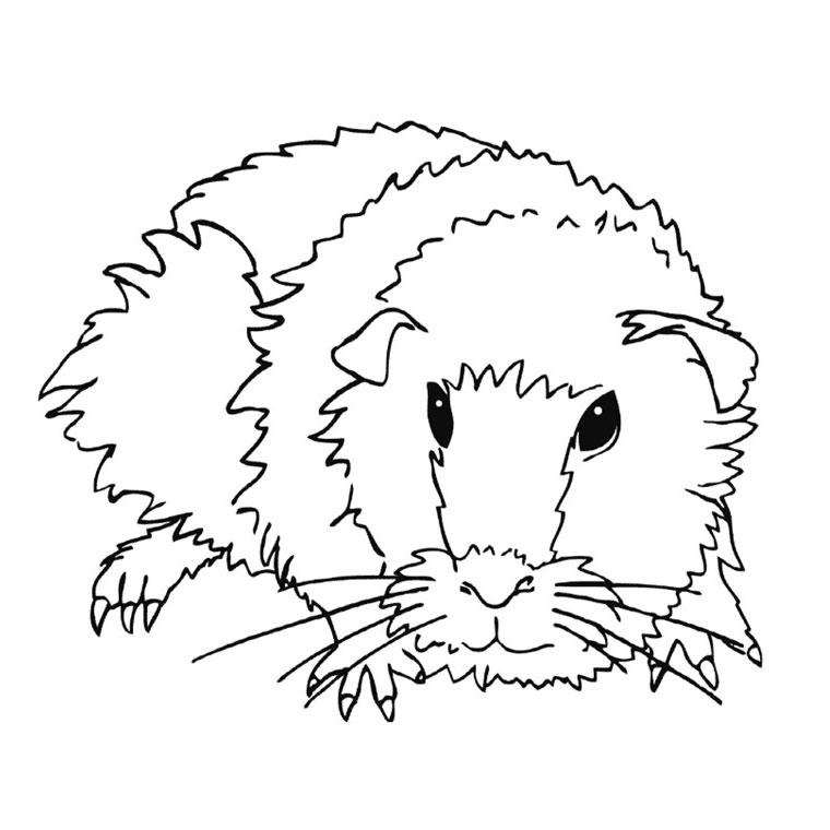 Coloriage Hamster Kawaii.Dessin Hamster Russe A Imprimer