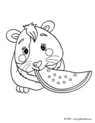 dessin hamster imprimer gratuit