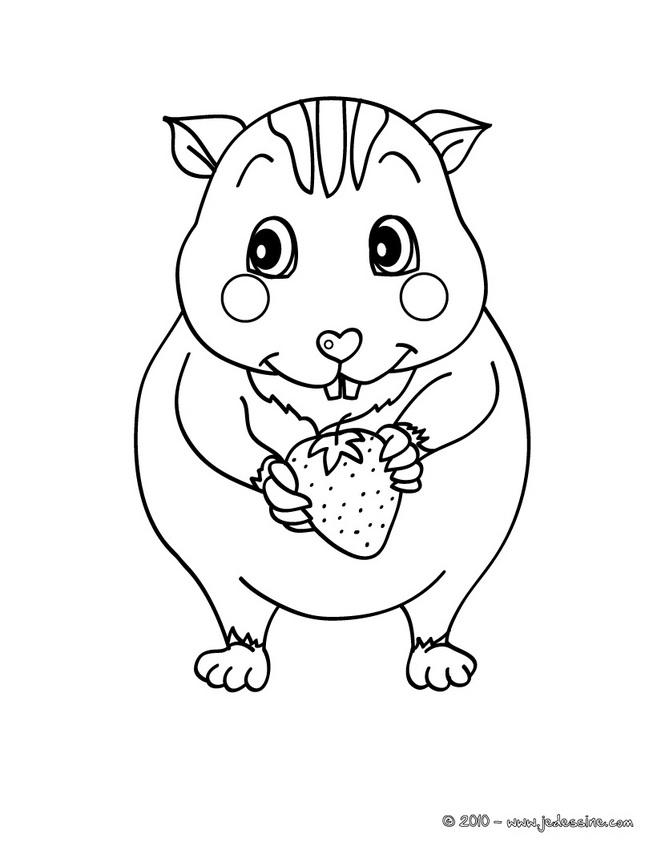 coloriage hamster nain