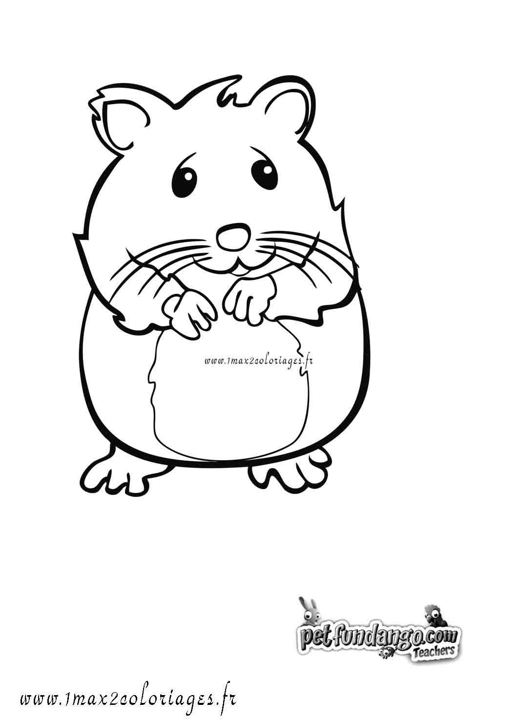 coloriage hamster imprimer gratuit