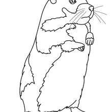 coloriage à imprimer hamster
